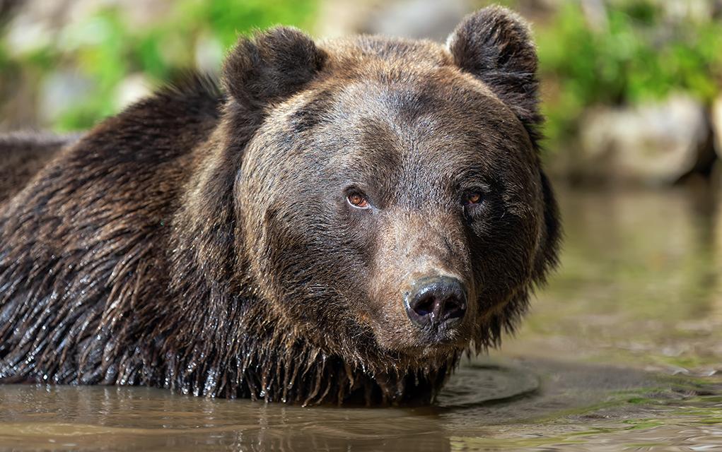 Rencontre un Gay bears